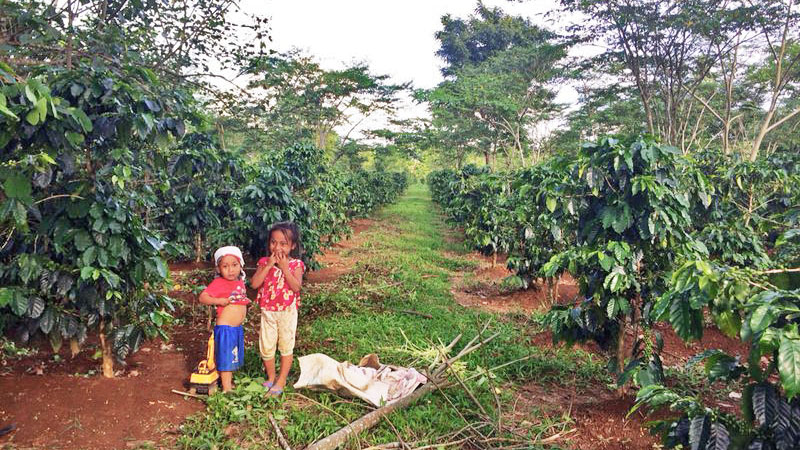 resident farmers